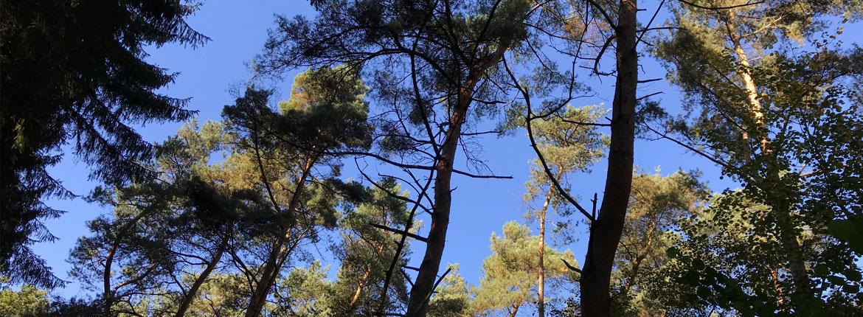 Bäume im Venner Moor